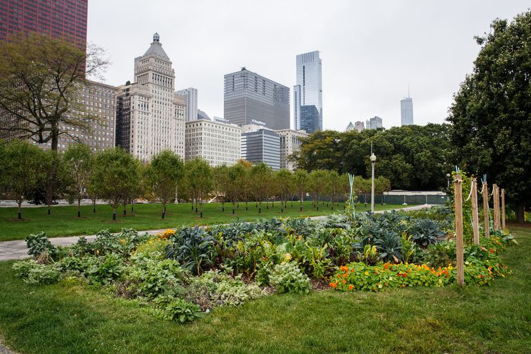 urban garden in Chicago