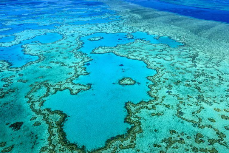 Por qué está en peligro la Gran Barrera de Coral