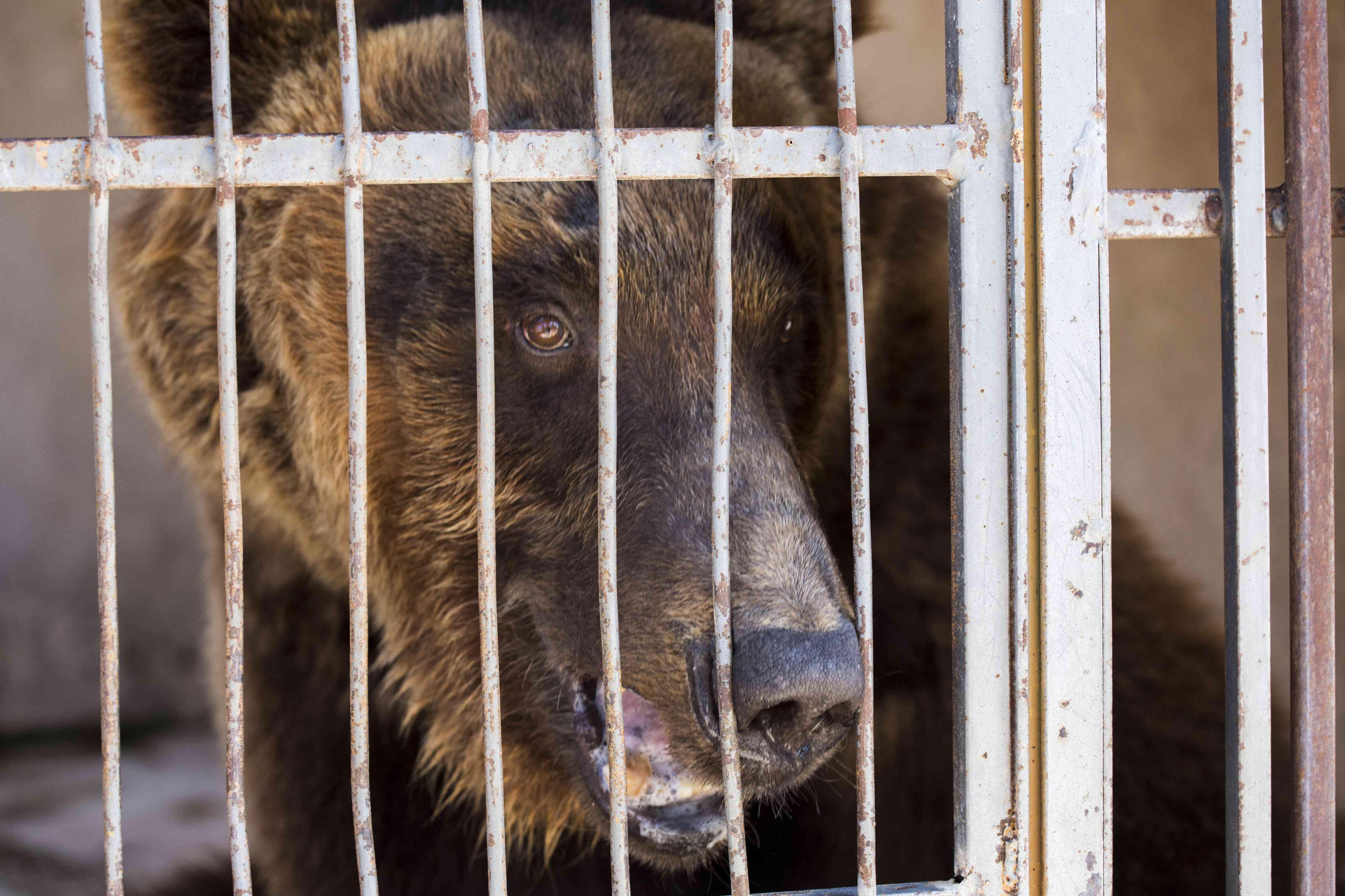 rescued bear