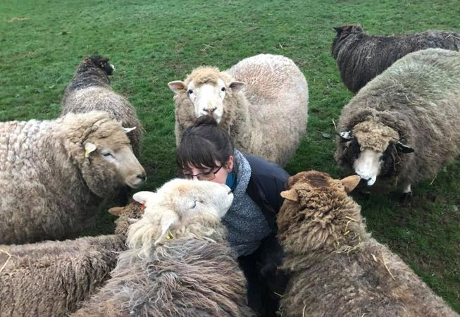 Di Slaney is swarmed by sheep wanting pets and treats