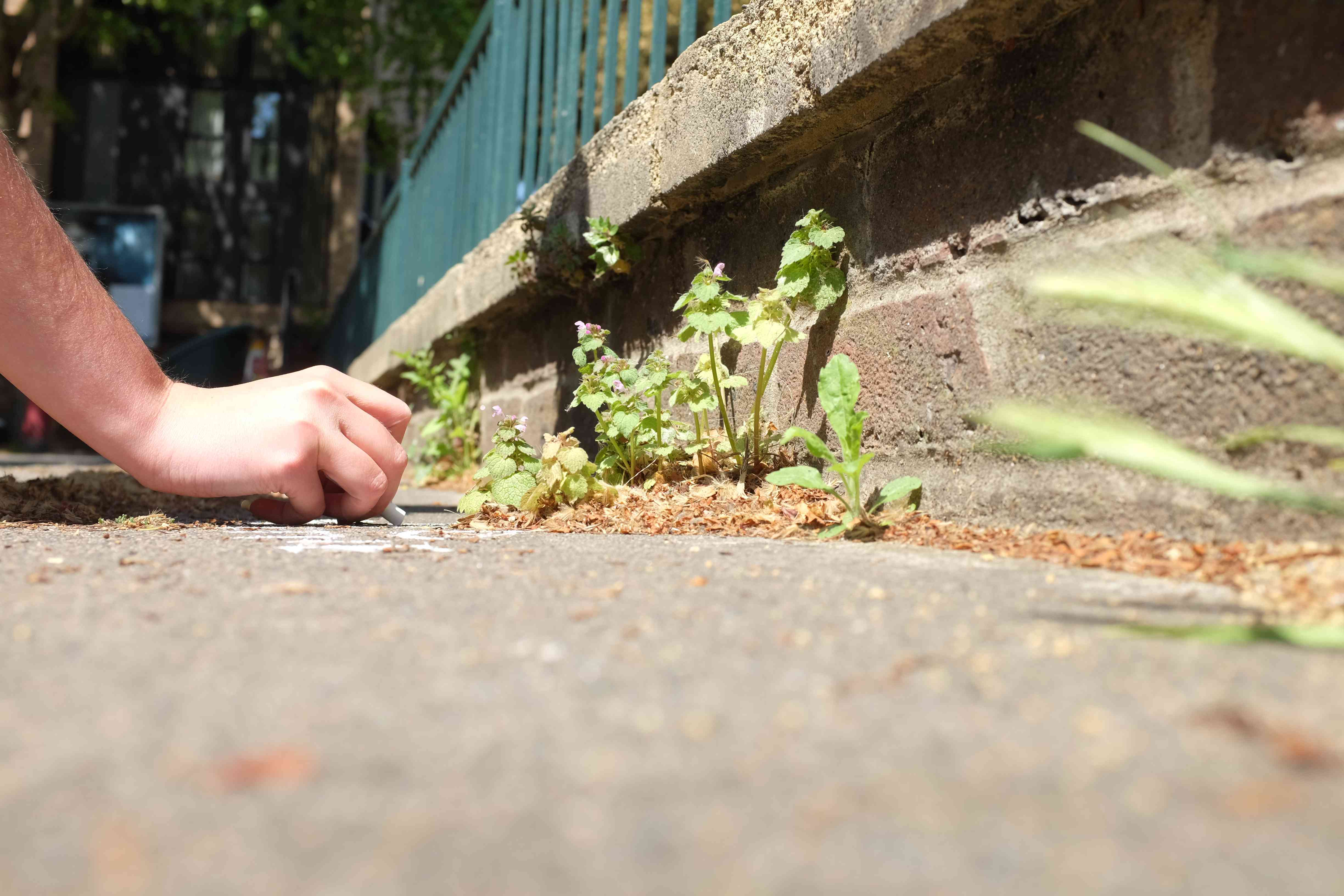 Sophie Leguil chalking the name of a plant on a sidewalk