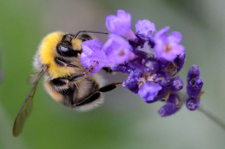 5 formas de ayudar a nuestras abejas que desaparecen