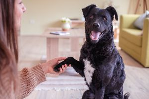 black dogs looks into camera while holding owner's hand with paw