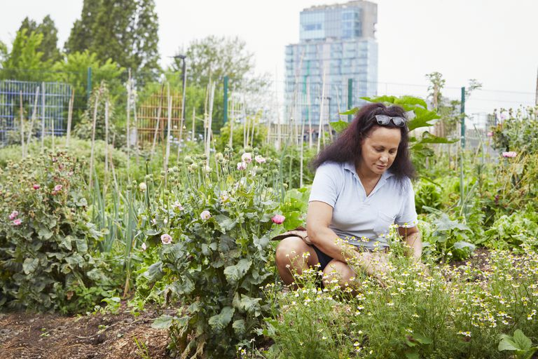 A Black woman tending to her urban community garden.