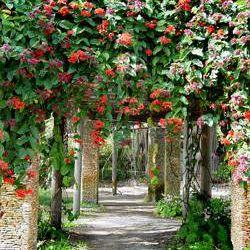 Fairchild Tropical Botanic Garden pergola