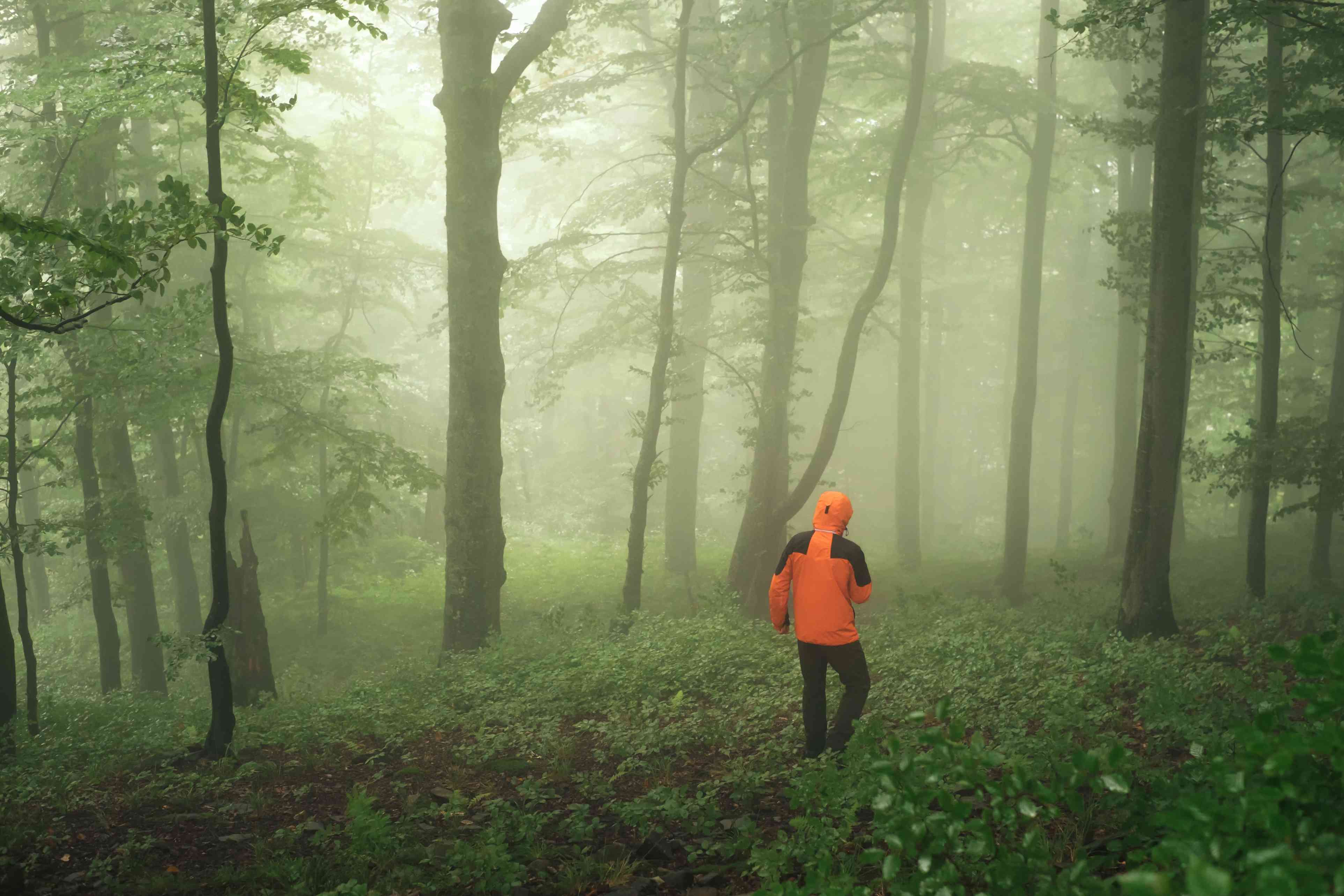 person walking through a foggy forest