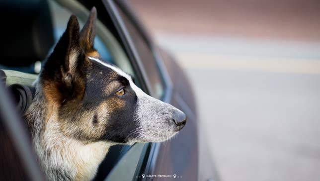 Una guía completa para realizar viajes por carretera con su perro