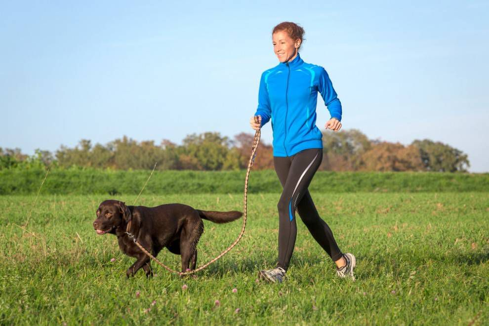 dog running on leash
