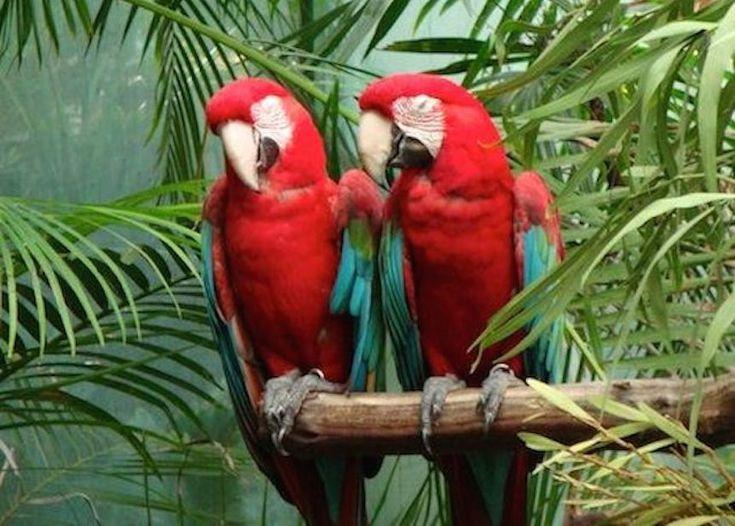 Escaped Pet Birds Are Teaching Wild Birds To Speak English