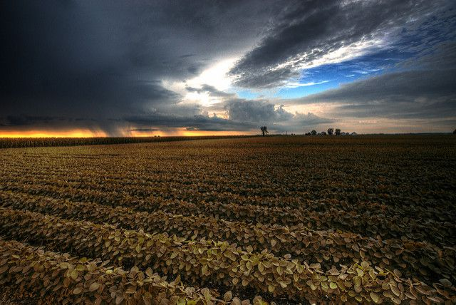 agriculture-impact-climate-change-photo.jpg