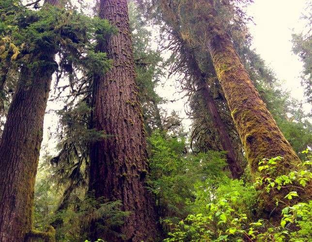 rain forest trees