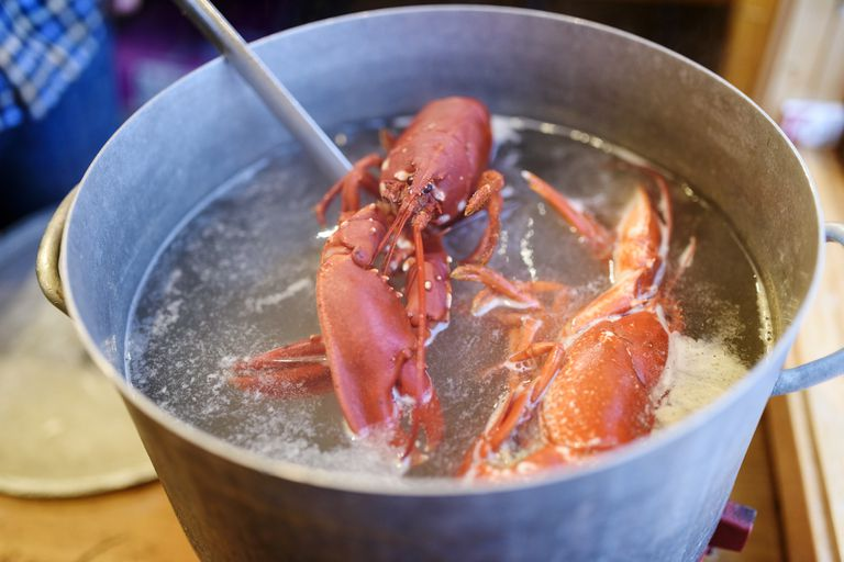 Lobsters in a pot of water