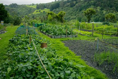 Supporting sustainable growing practices minimizes environmental impacts.