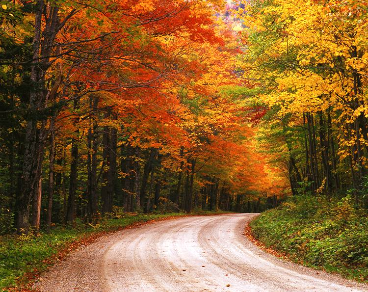 Brightly colored trees in shades of red, gold, orange, and green among green ground cover along a dirt road in the Green Mountain National Forest, Vermont