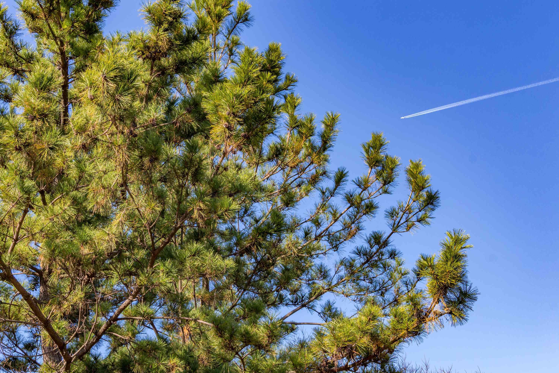 airplane contrail above Onomachi, Kanazawa, Japan