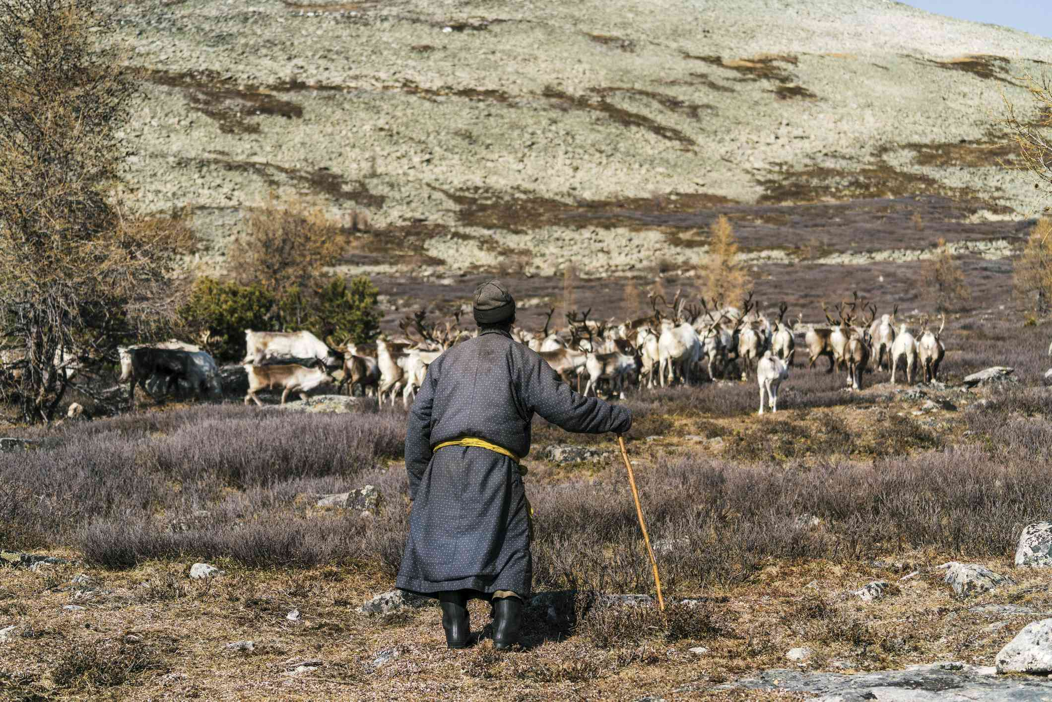 Shepherd with sheep on the steppe tundra in Siberia
