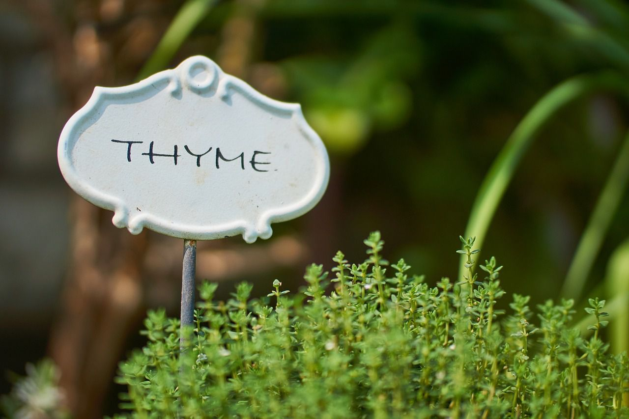 9 Companion Herbs to Help Repel Insects