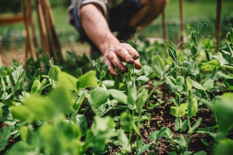 A man's hand gently caresses plants growing in a garden.
