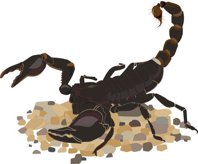An illustration of a scorpion