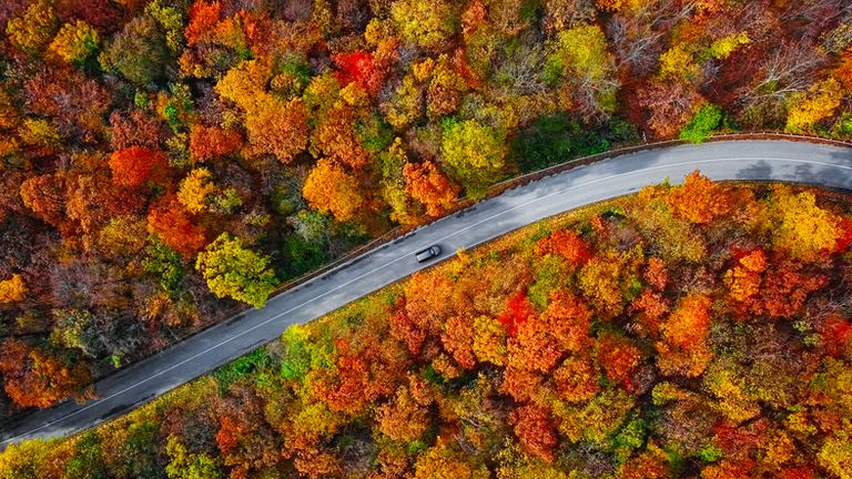 Overhead aerial view of winding mountain road inside colorful autumn forest