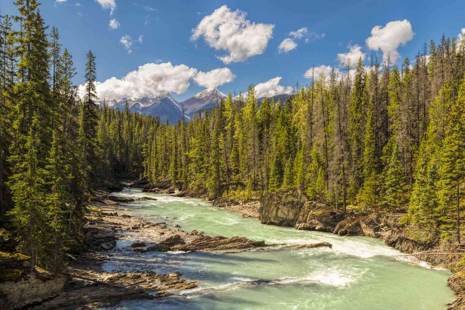 A river rushes through the middle of a coniferous forest in Yoho National Park