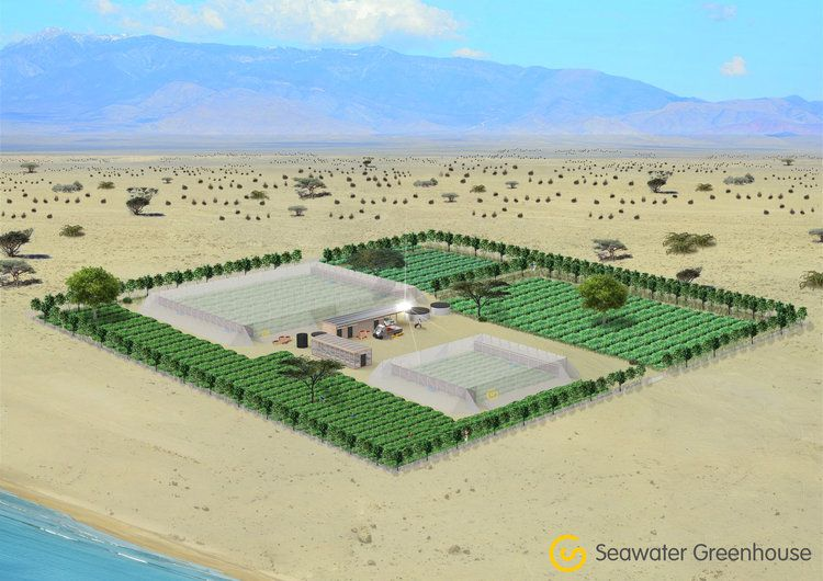 Conceptual rendering of Seawater Greenhouse's Somaliland project.