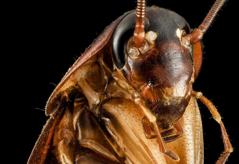 El clima de Nueva York está inspirando a las cucarachas gigantes a volar