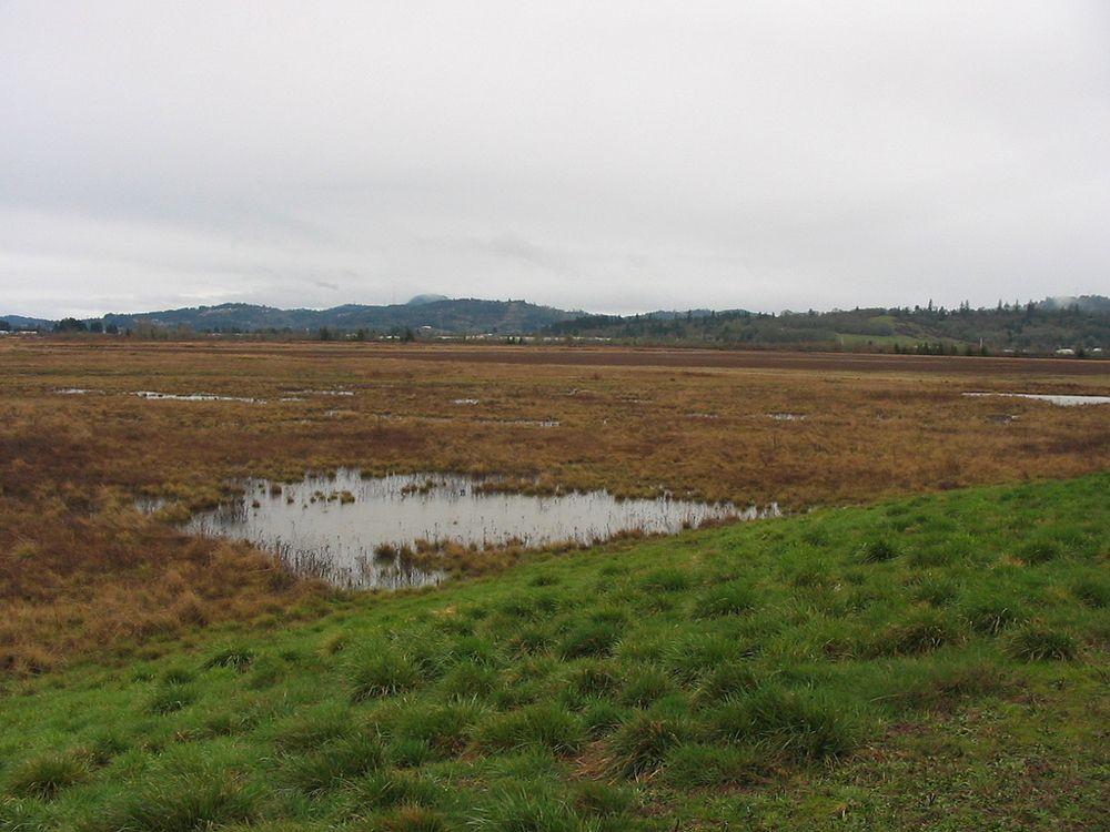 A vernal pool in West Eugene Wetlands