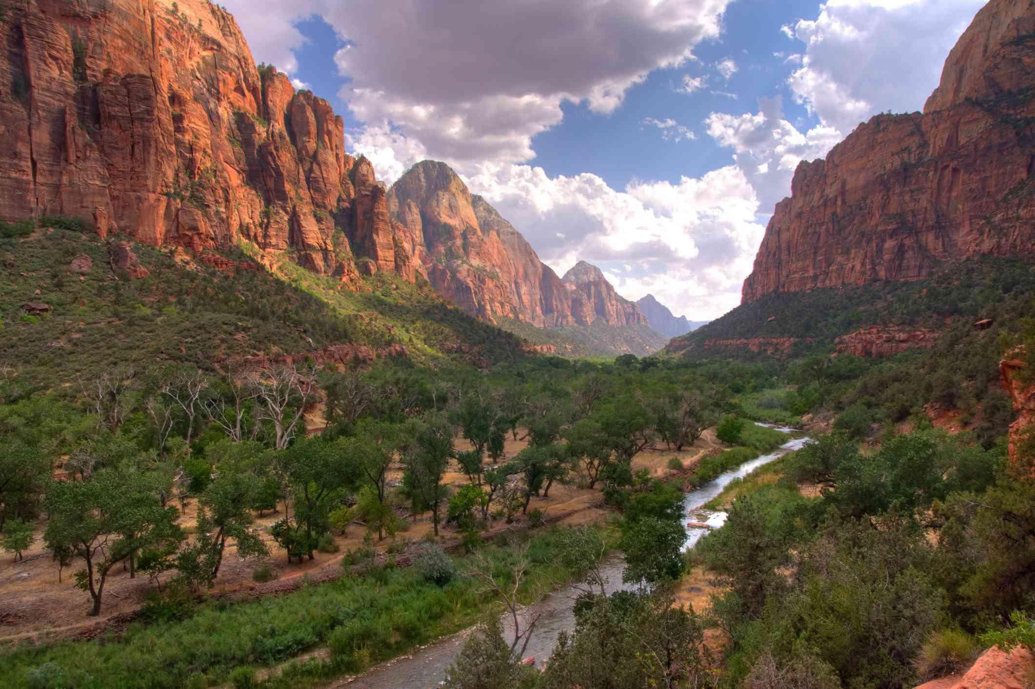 Greenery inside Zion National Park
