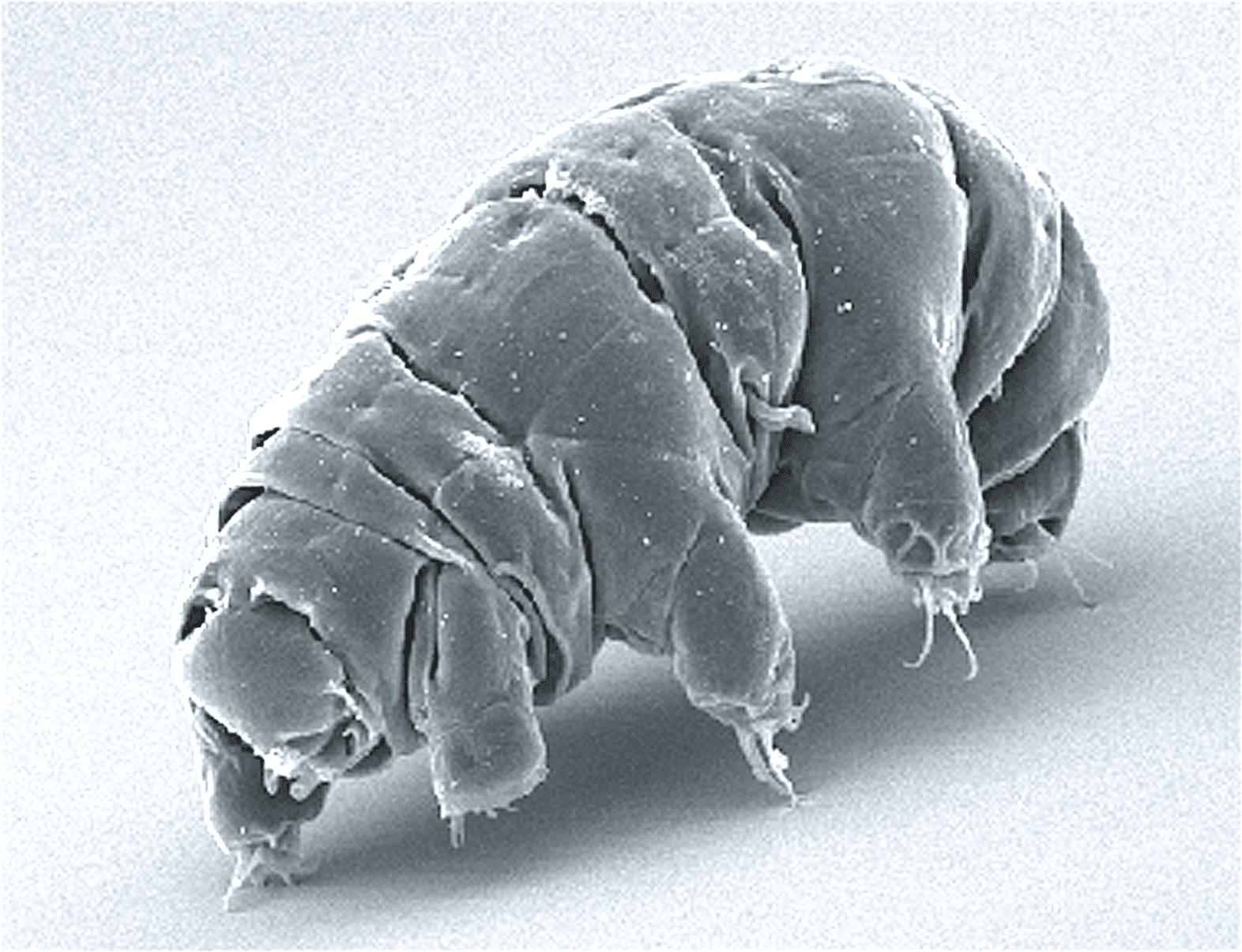 4 Ways Tardigrades Are Nearly Indestructible