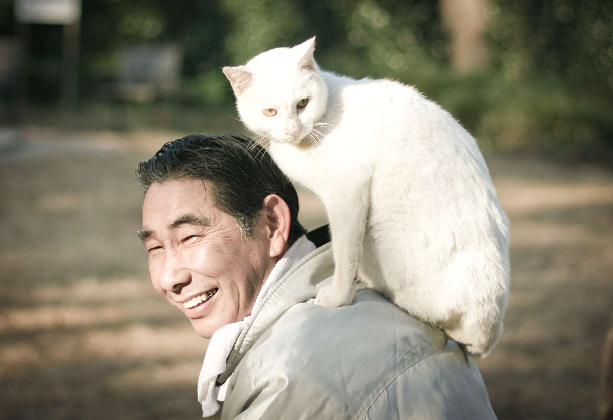 white cat perches on back of older asian man in sunlight