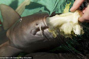 hand feeding shark photo.