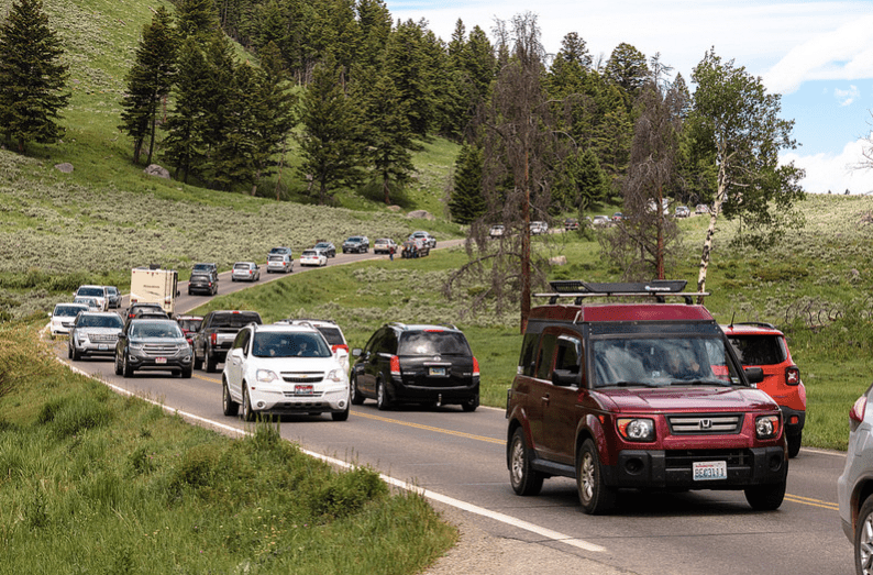 Traffic in Yellowstone National Park