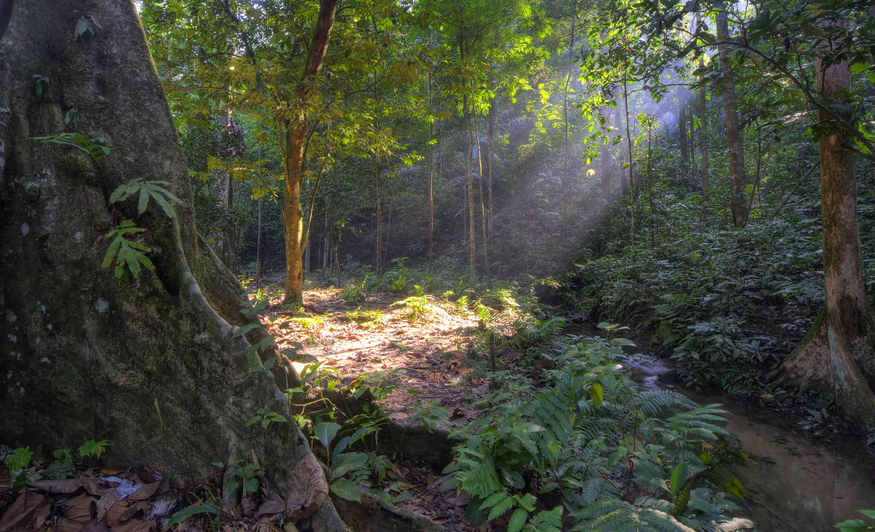 tropical forest at Kanching Park in Selangor, Malaysia