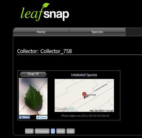 leaf snap photo
