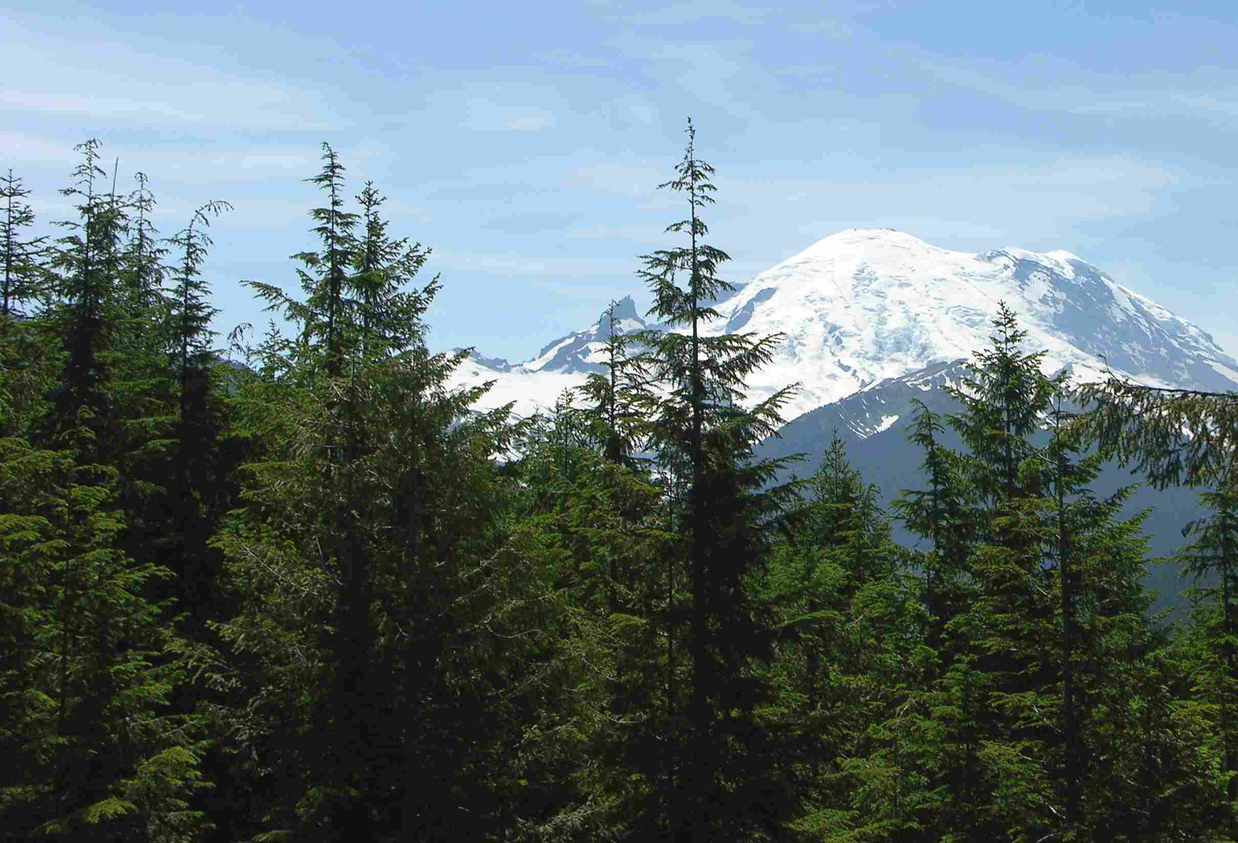 Western hemlock trees in front of mountain range.