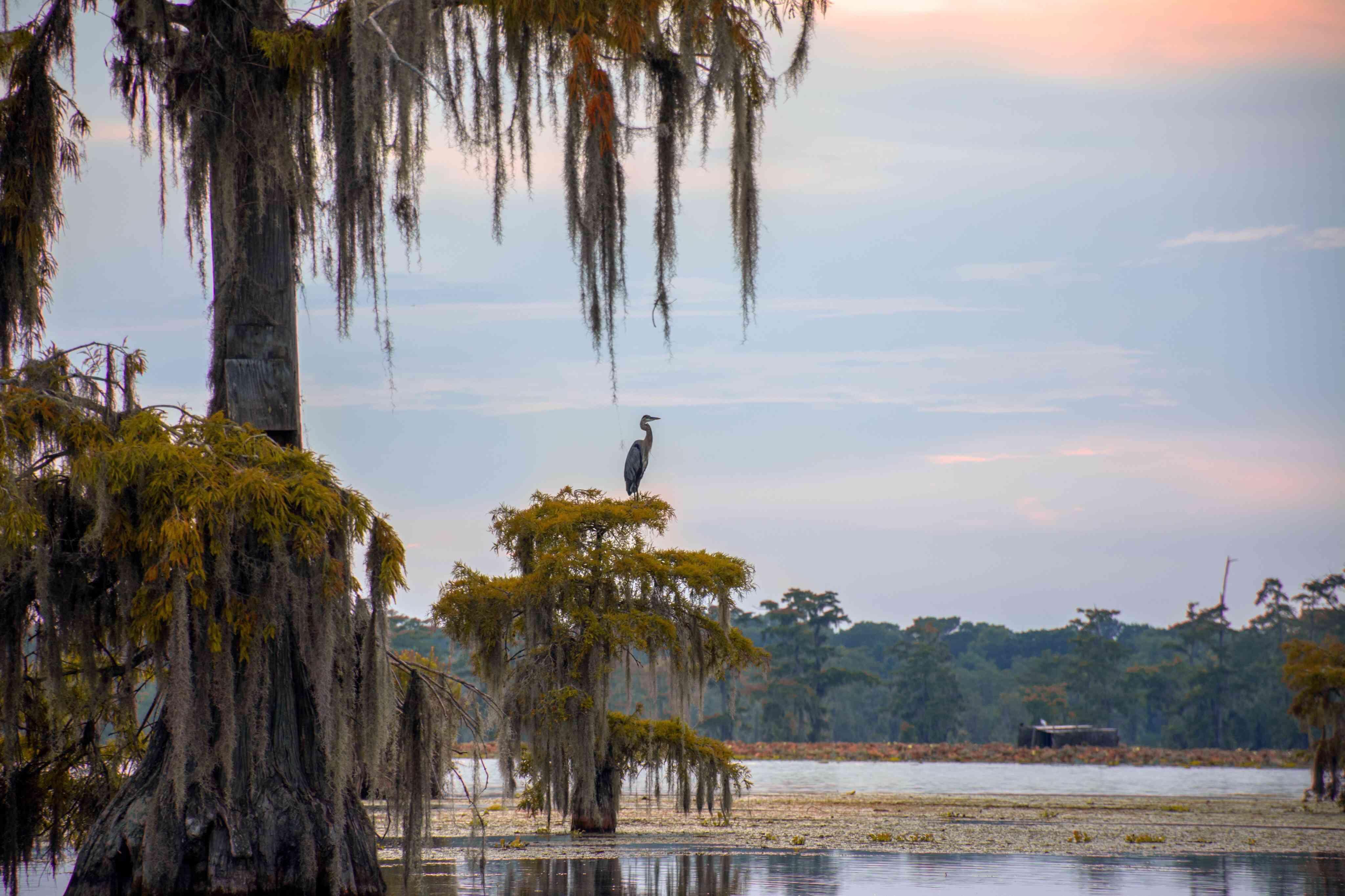 Seabird sitting on tree branch on the coast in Louisiana