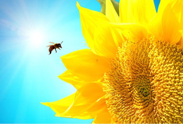 Insectos beneficiosos: cómo atraer insectos buenos a su jardín