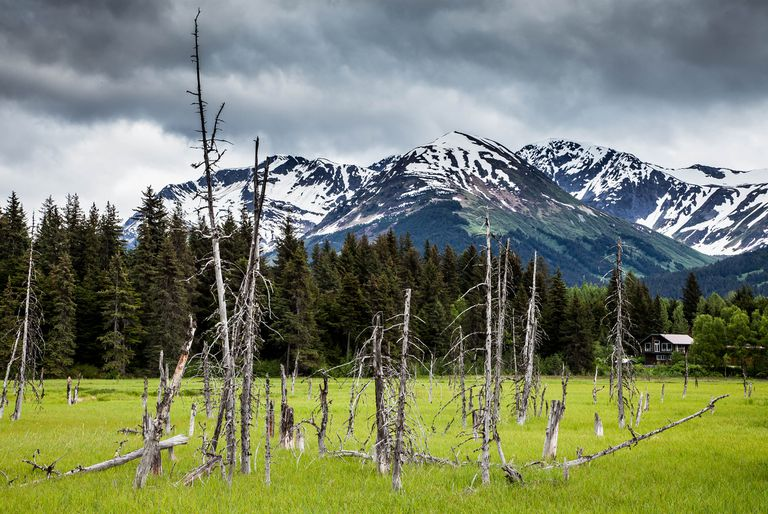 Ghost forest rising from grass with mountains in background