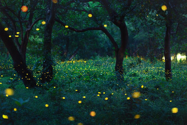 Here's How We Are Killing Off the Fireflies