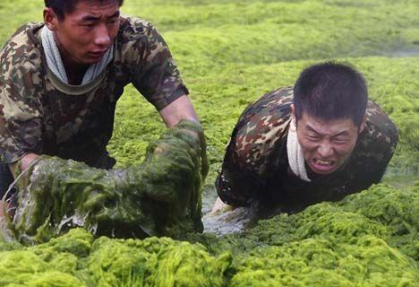 china algae bloom photo