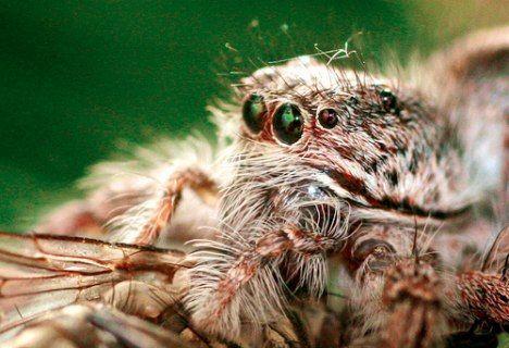 spider hairs photo