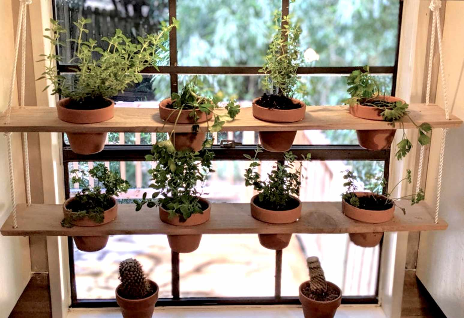 Hanging shelves holding plants in front of a window