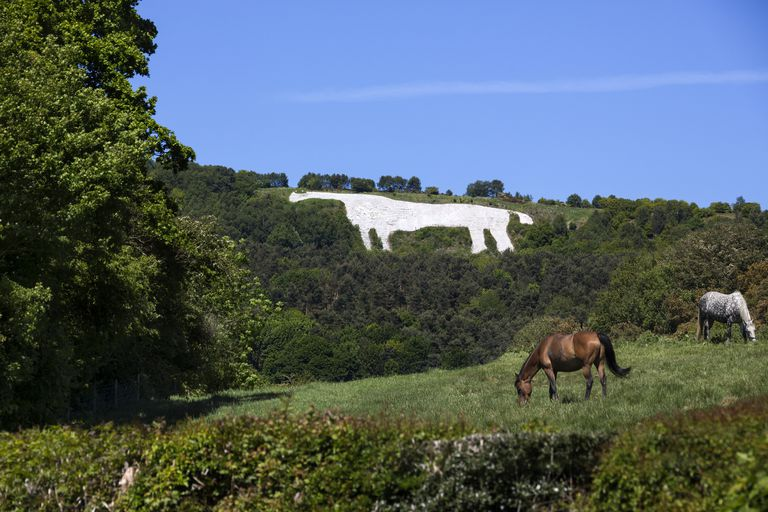 The Kilburn White Horse carving on.a hill in the North York Moors National Park with two horses grazing on the land below and a bright blue sky above on a sunny day