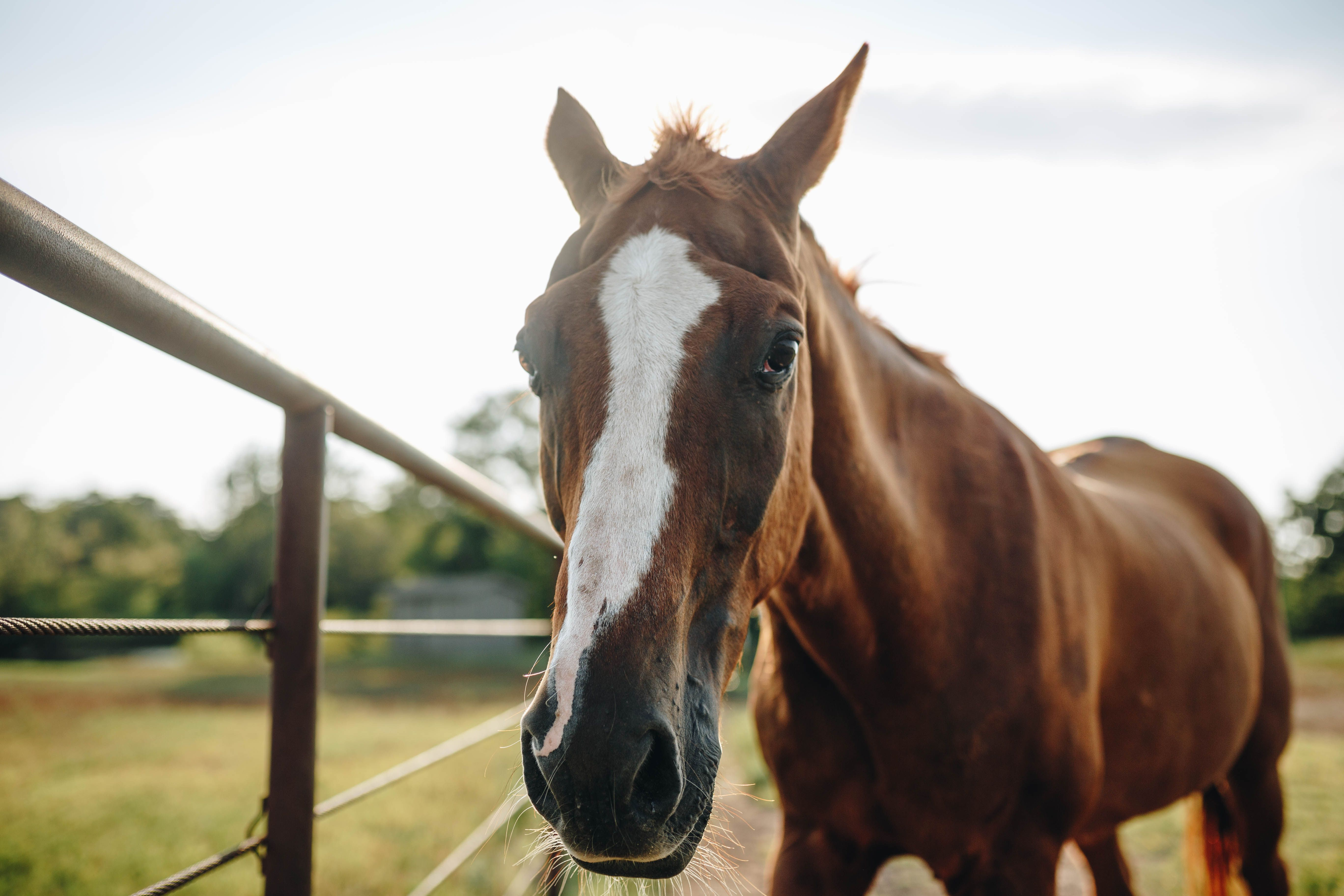 What Is It About Horses 13 Quotes That Explain The Allure