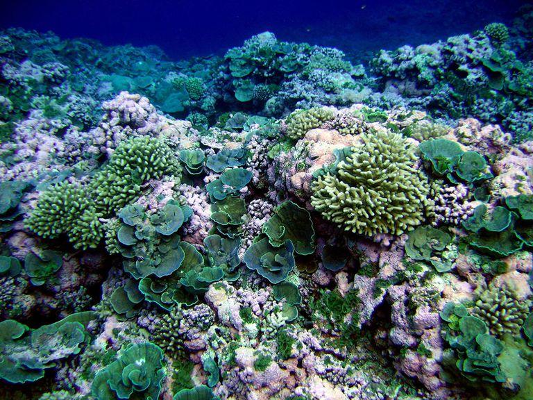 Cómo elegir un protector solar que sea seguro para los arrecifes de coral y para usted