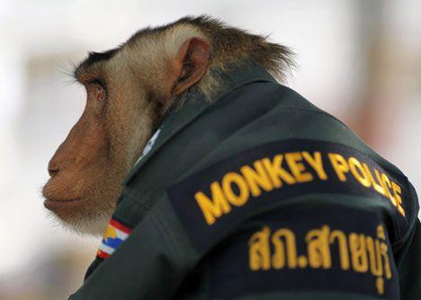 monkey police officer