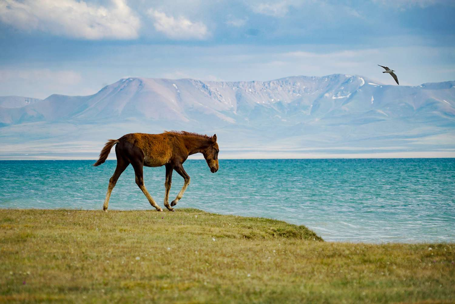 A horse trots in front of the blue waters of Song Kul on an overcast day