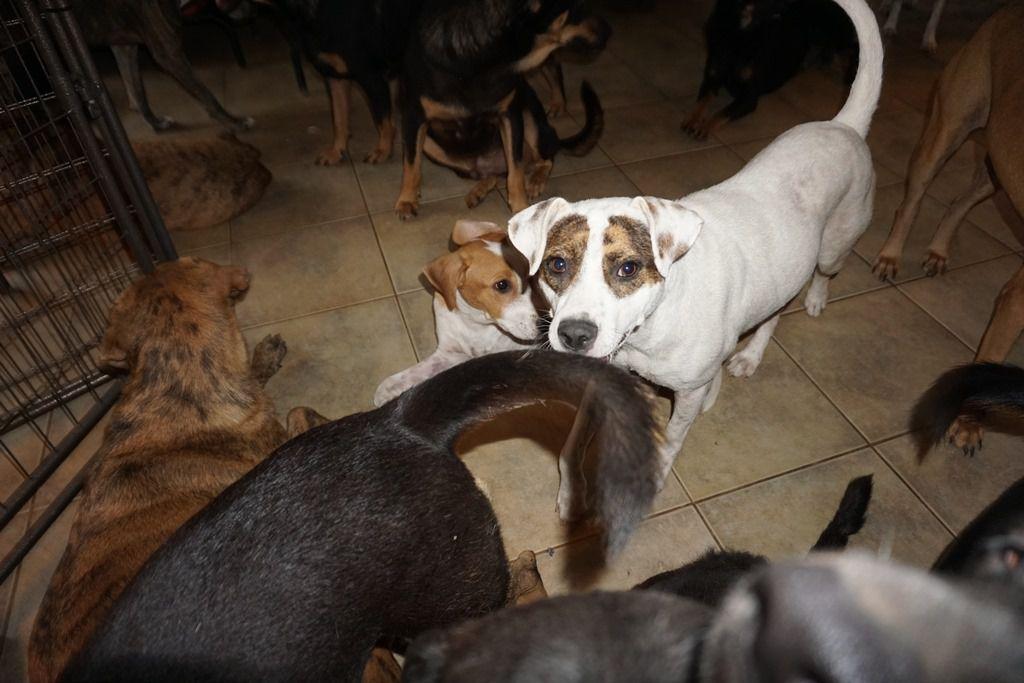 hurricane rescue dogs