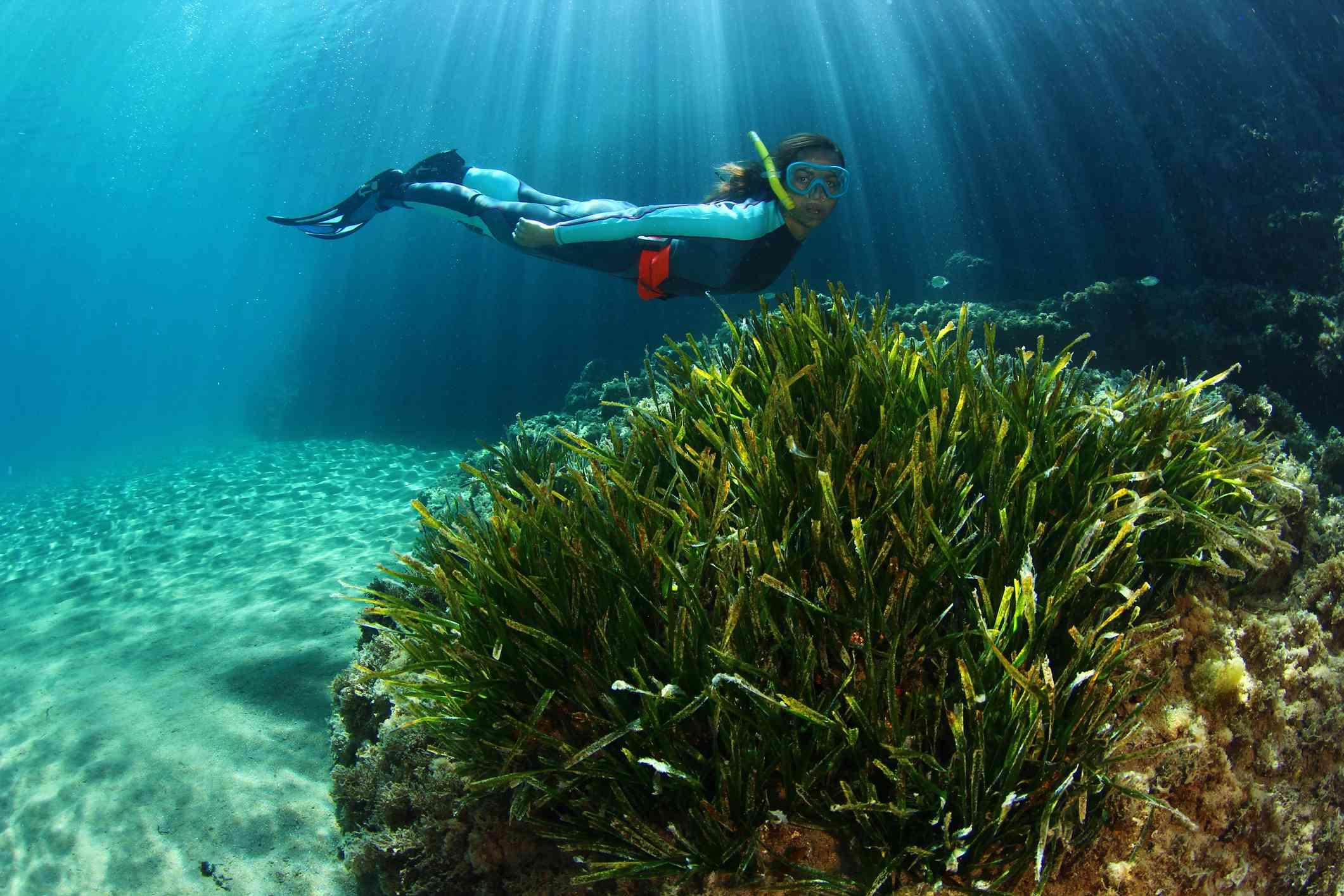 Snorkeler swimming near large posidonia